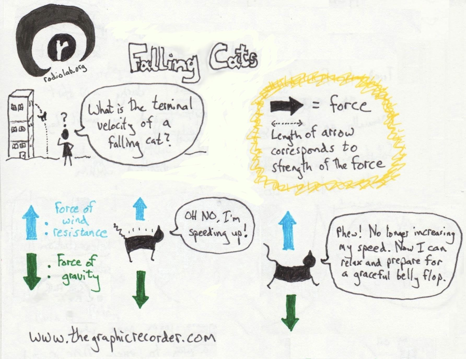 The graphic recorder sketch notes radiolab falling cats and newton's second law