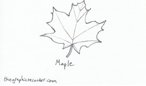 The Graphic Recorder - Visual Vocabulary - Tree Leaves of Oregon - Maple
