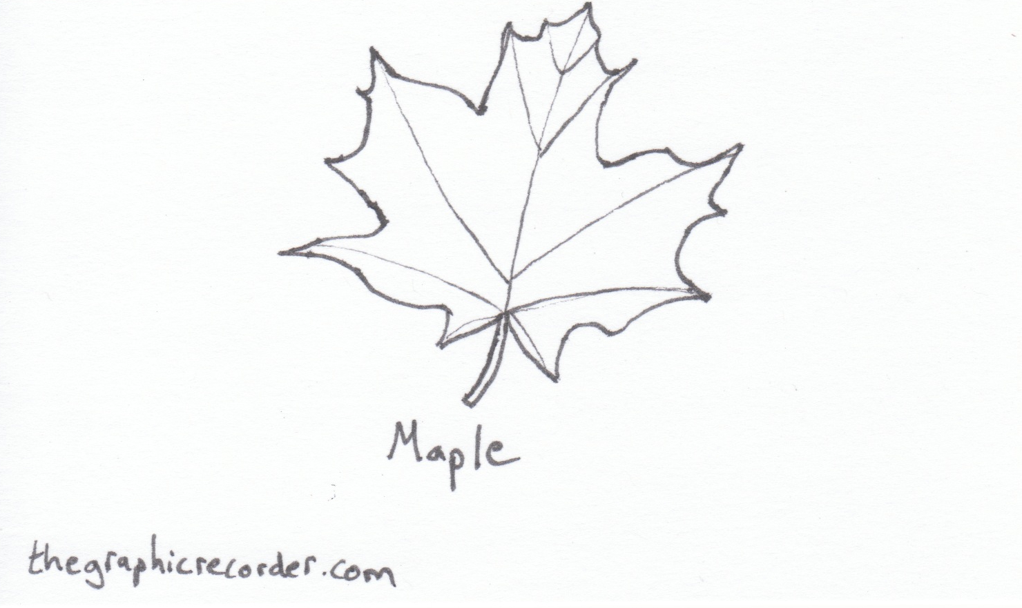simple sketches of tree leaves of oregon the graphic recorder